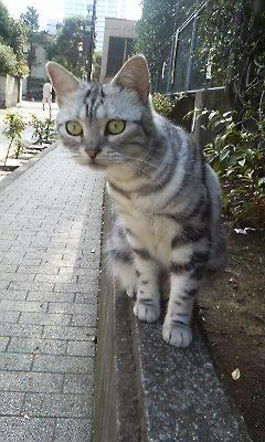 senjucat3.jpg